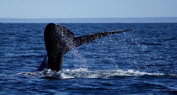 Puerto Madryn - Paquete Flexible!