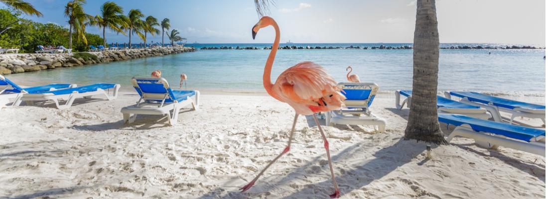 Aruba - Low Cost