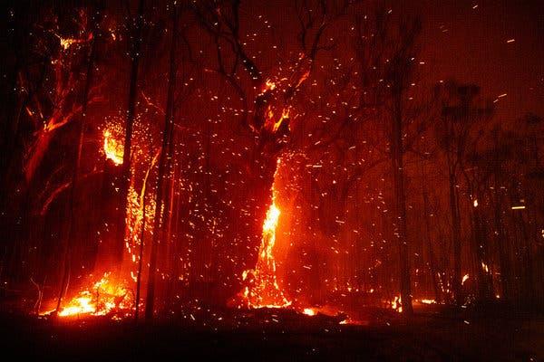 Relief Fund for Australia Bushfire