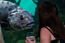 NightLife at the California Academy of Sciences - Culture | Drinking Activity | Event Space | Museum in San Francisco.