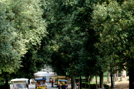 Villa Borghese - Outdoor Activity | Park in Rome.
