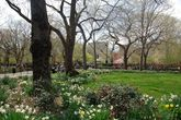 Tompkins Square Park - Park | Event Space in East Village, NYC