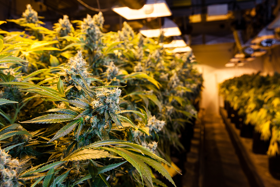 So You Want to Start a Cannabis Business: Advice for the