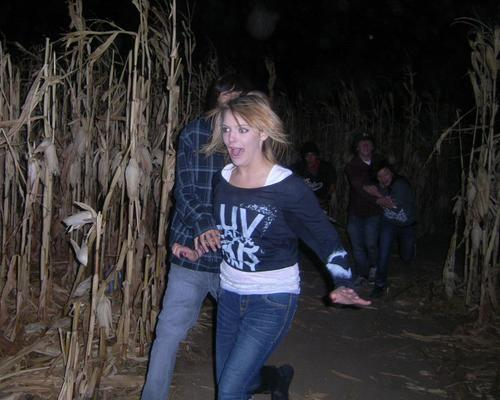 Scream Acres Haunted Corn Field image