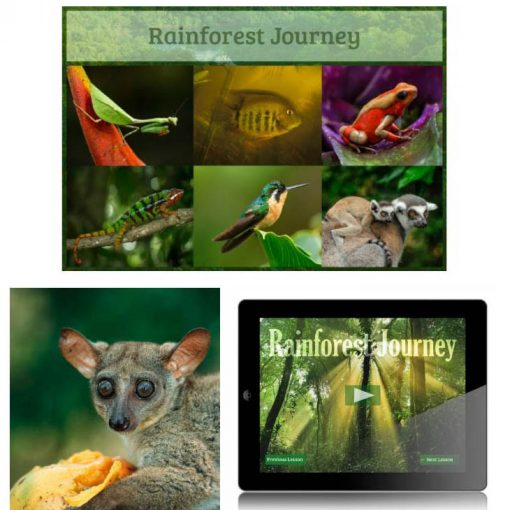 Rainforest Journey