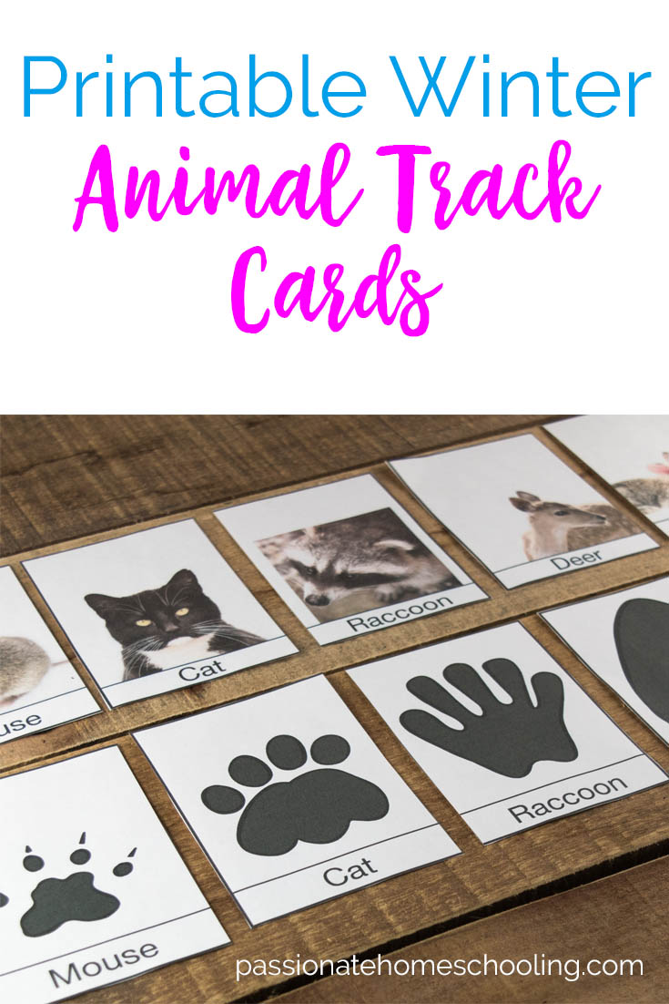 These free printable animal track cards are perfect for a winter nature game. With a focus on animals your likely to find around your home in the winter. Use these cards to help your children identify animal tracks or play matching games. #freeprintable #homeschool #naturestudy #unitstudy