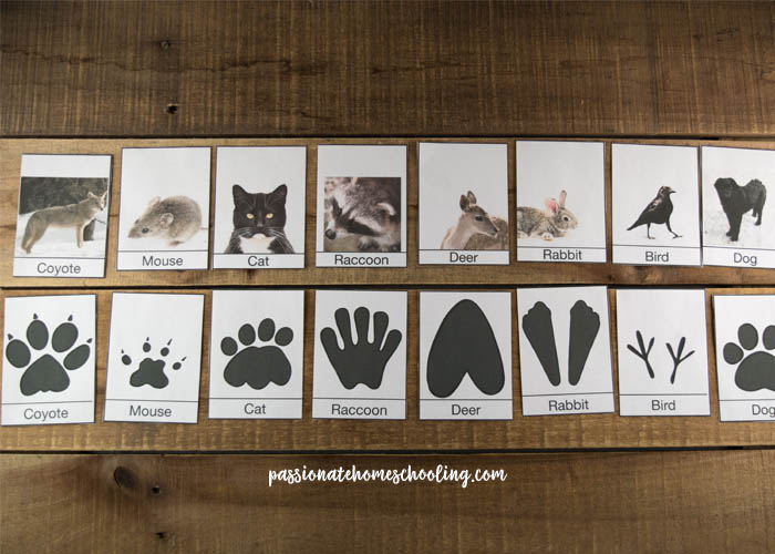 Animal footprint identification cards for kids free printable