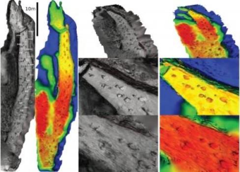 Rebuilding a dinosaur trackway
