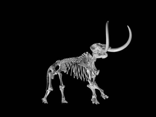 Palaeontology in 3D