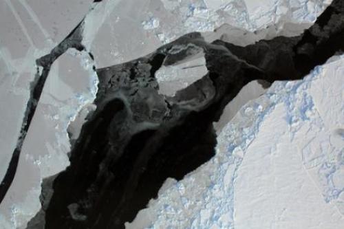 Bad news for polar bears