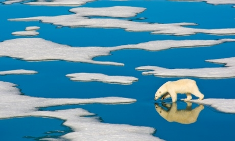 Norway calls for greater protection of the polar bear