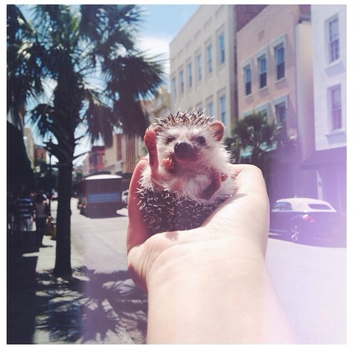 Hedgehogs are not the perfect pet