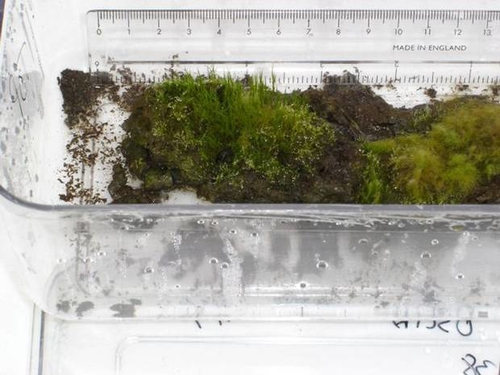 1500yr old cryogenically preserved moss