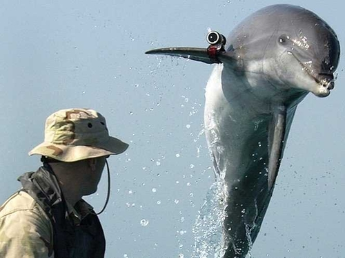 Ukraine's combat dolphins switch allegiance to Russia