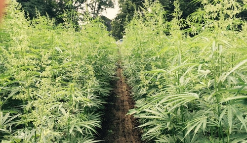 Soon Hemp May Be A Tradable Commodity With Startup Seed CX