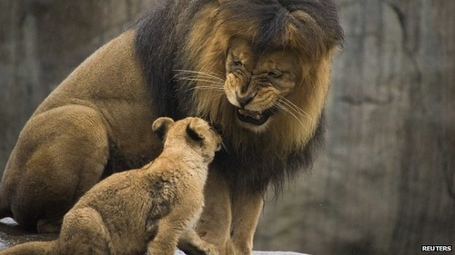 Infanticide and the brutality of natural selection