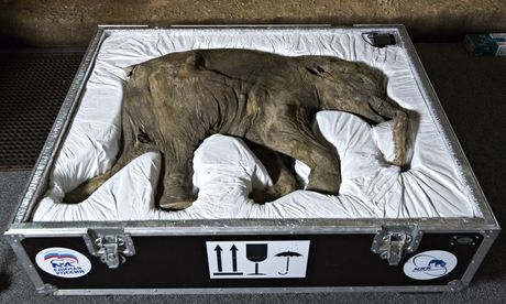 Baby mammoth in London