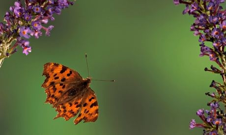 Insects defying habitat destruction and climate change