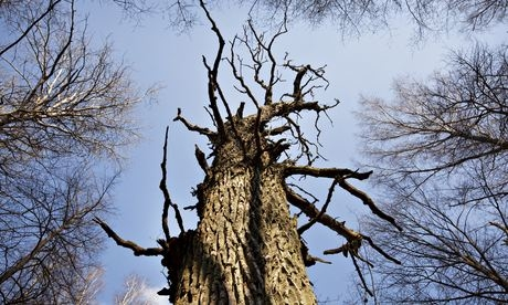 A tree is a tree- isn't it?