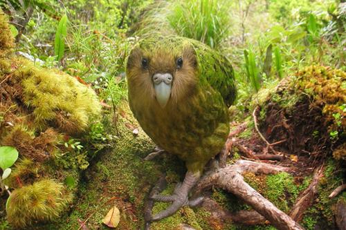 Endangered species on EDGE