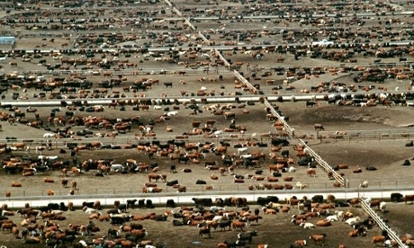 Meat is worse than cars for carbon emissions