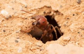 Ants may boost CO2 absorption