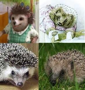 Mrs Tiggy-winkle is a European hedgehog