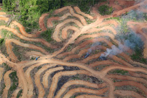 Big Data and forest conservation