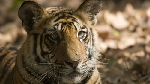 Global animal populations halved in 40 years