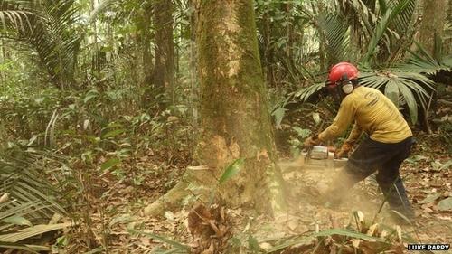 Forest degradation: a hidden process