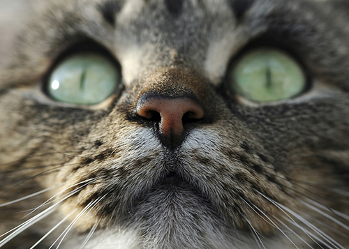Cats or Dogs? The Trouble With