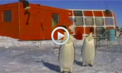 Penguins must march to survive climate change