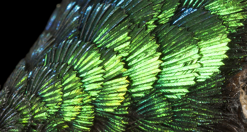 Seeing through the eyes of dinosaurs: stunning feathers and color vision