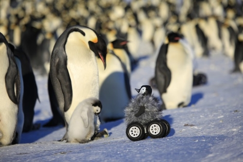 World's cutest rover: dressed as a penguin chick to research colonies