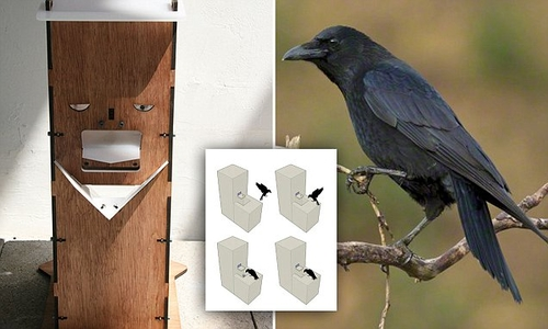 Vending machine for crows tests intelligence in a natural setting