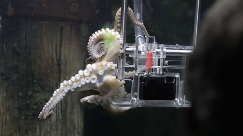 Octopus learns to use camera, photographs tourists