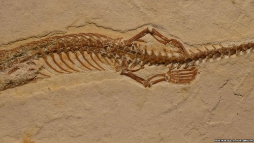 First four-legged snake fossil found