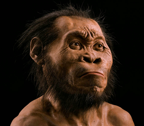 What's the importance of Homo naledi?