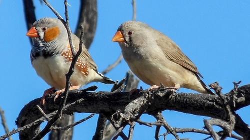 Birds argue,
