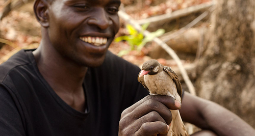 Wild birds communicate back and forth with human honey hunters in mutualistic partnership