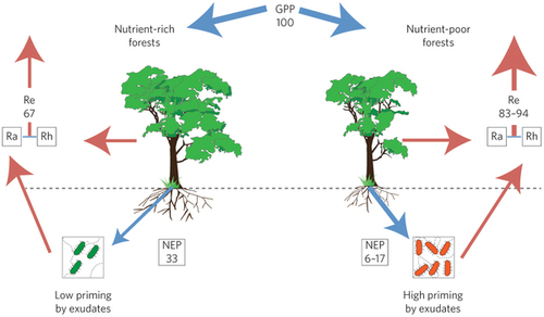 Nutrients control carbon sequestration in forests