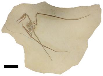 Total pterosaur