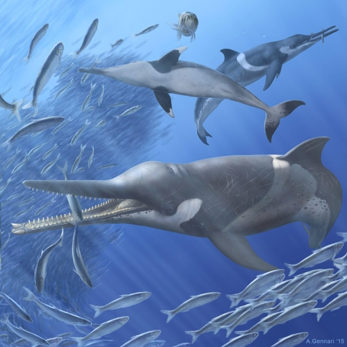 Fossil Whale Vomit