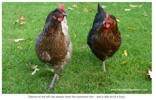 Lessons in marketing from Chicken Coops Direct!