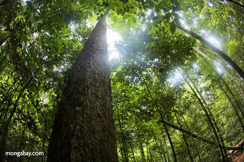 Conserving rainforests, charismatic megaflora, in 2015