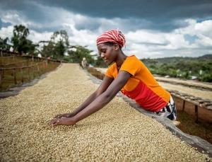 Future-proof coffee genome