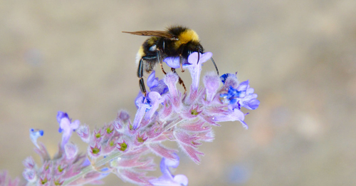Bees are losing ground to climate change