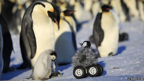 Using a remote control car to research Penguins.