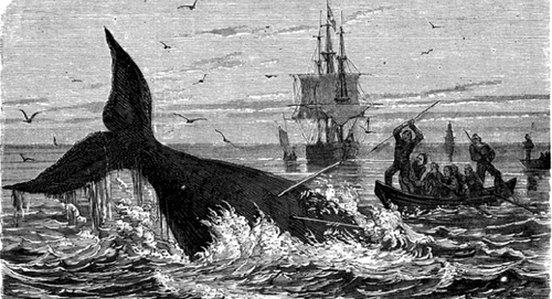 What is whaling and is it really worth $5 billion?