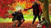 Shared Parental Leave for Grandparents